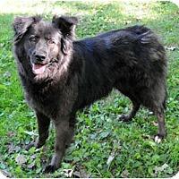 Adopt A Pet :: Morgan - Chicago, IL