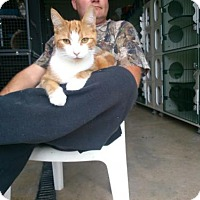 Adopt A Pet :: Mandarin - Hamilton, ON