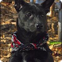 Adopt A Pet :: Hallie - Glastonbury, CT