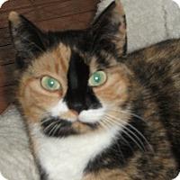 Adopt A Pet :: Naomi - Colmar, PA