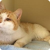 Adopt A Pet :: Zach - Creston, BC