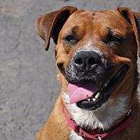 Adopt A Pet :: Namaste - Grayslake, IL