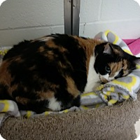 Adopt A Pet :: Sweetie - North Kingstown, RI