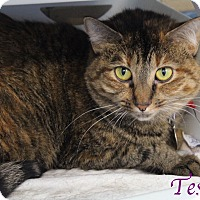 Adopt A Pet :: Tesla - Bradenton, FL