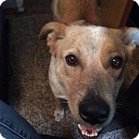 Adopt A Pet :: Calvin - Meridian, ID