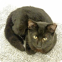 Adopt A Pet :: Chica - Tampa, FL