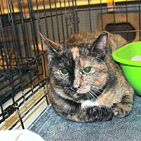 Adopt A Pet :: Cas - Rochester, MN