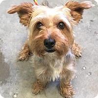 Adopt A Pet :: Eevee - Decatur, GA