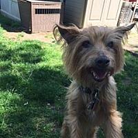 Adopt A Pet :: Ziggy - N. Babylon, NY