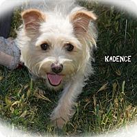 Adopt A Pet :: Kadence - Patterson, CA