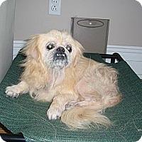 Adopt A Pet :: Gus - Richmond, VA