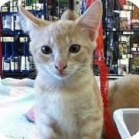 Adopt A Pet :: Danny - Riverside, RI
