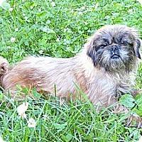 Adopt A Pet :: Haagen-Dazs - Mocksville, NC