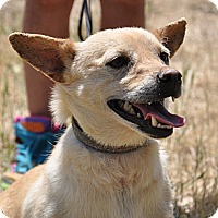 Adopt A Pet :: Charlie - Valley Springs, CA