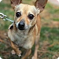 Adopt A Pet :: Sanchez - Tinton Falls, NJ