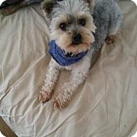 Adopt A Pet :: Teddy - West Palm Beach, FL