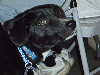 Terrier (Unknown Type, Medium)/Catahoula Leopard Dog Mix Dog for adoption in Baton Rouge, Louisiana - Huey