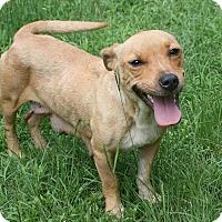 Adopt A Pet :: Bambi - Lufkin, TX