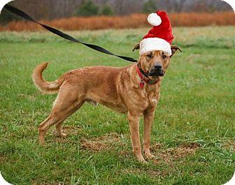 Hound (Unknown Type) Mix Dog for adoption in Sullivan, Missouri - Hudson
