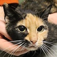 Adopt A Pet :: Portua - Richand, NY