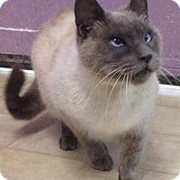 Adopt A Pet :: Bennie - Whittier, CA