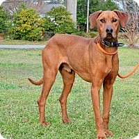 Adopt A Pet :: Carl - Washington, GA