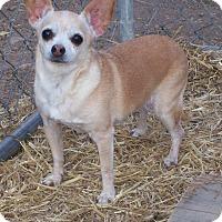 Adopt A Pet :: Sandy - Questa, NM