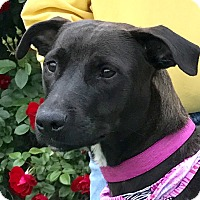 Adopt A Pet :: Emma - Evansville, IN