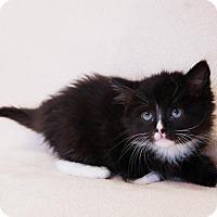 Adopt A Pet :: Sandy - Toccoa, GA