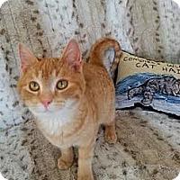 Adopt A Pet :: Morgan *bonded with Captain* - Eagan, MN