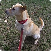 Adopt A Pet :: Julie - Jacksonville, FL