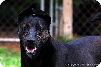 Shepherd (Unknown Type) Mix Dog for adoption in Elizabeth City, North Carolina - Kelcey