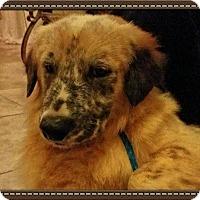 Adopt A Pet :: Freddy - Miami, FL