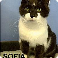 Adopt A Pet :: Sofia - Medway, MA
