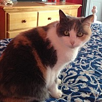 Adopt A Pet :: Winnie - Furlong, PA