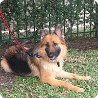 Adopt A Pet :: Paris - Houston, TX