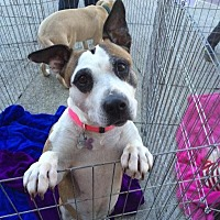 Adopt A Pet :: Baby - Acworth, GA