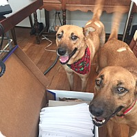 Adopt A Pet :: FRANKIE AND GRACE - Littleton, CO