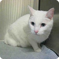 Adopt A Pet :: GIRL KITTIE - Norco, CA