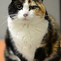 Adopt A Pet :: Sabrina150695 - Atlanta, GA