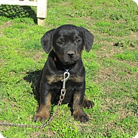 Adopt A Pet :: FLORIE - Hartford, CT