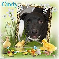 Adopt A Pet :: Cindy - Crowley, LA