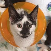 Adopt A Pet :: India - Boynton Beach, FL