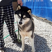Adopt A Pet :: Justin - Cavan, ON