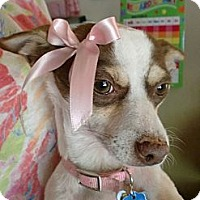 Adopt A Pet :: Mary Moo - Concord, CA