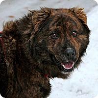 Adopt A Pet :: Boon - Wasilla, AK