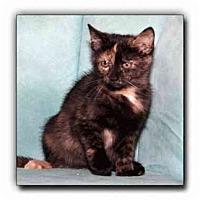 Adopt A Pet :: Carrie - Howell, MI