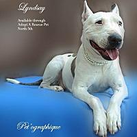Adopt A Pet :: Lyndsey - Las Vegas, NV