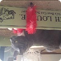 Adopt A Pet :: Kitchi - Fairborn, OH