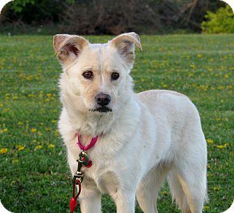 Terrier (Unknown Type, Medium) Mix Dog for adoption in Grinnell, Iowa - Hershey